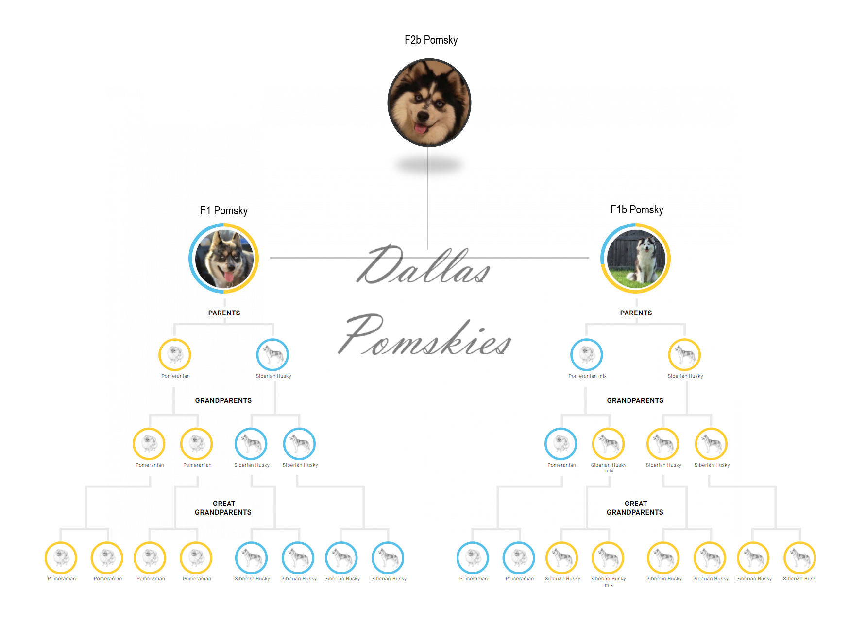 Our Puppies Our Puppies dallaspomsky puppy chart 1